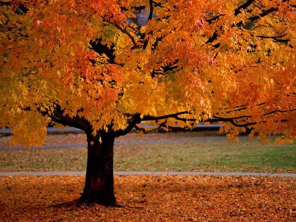 Vivaldi.... Les 4 Saisons : l'automne °°°°° dans MES EMOTIONS LA MUSIQUE CLASSIQUE a708fd8e